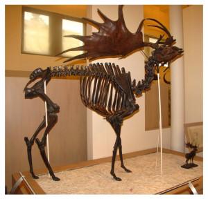 Musée-dHistoire-naruelle-30-300x288